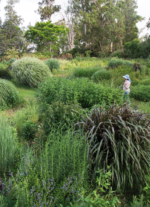 Vista del lote plantado en 2016. Vivian Mulcahy observa el desarrollo de las plantas: Salvia uliginosa, Miscanthus sinensis 'Cosmopolitan', y en primer plano, Pennisetum purpureum 'Princess Caroline', Aster lateralis y Salvia 'African Sky'.