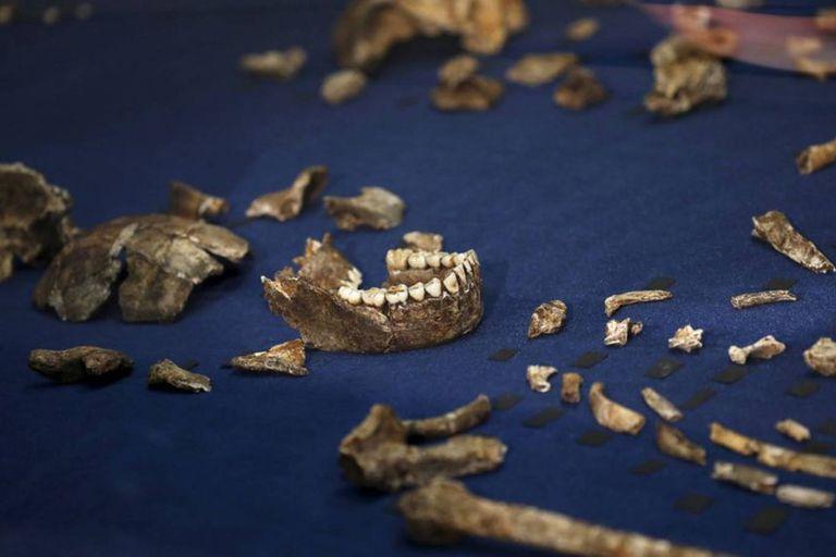 Restos del Homo naledi, encontrados cerca de Johanesburgo, en Sudáfrica