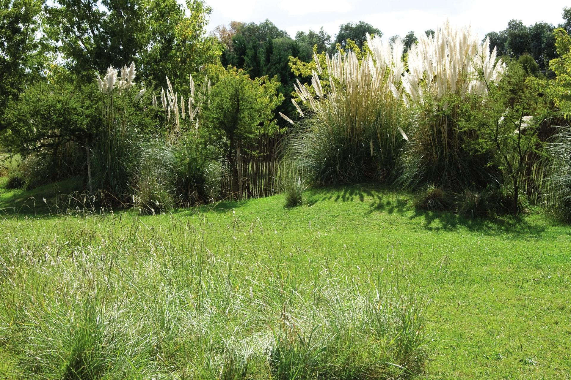 Las plantas locales cultivadas en los sitios adecuados no presentan enfermedades o plagas relevantes que desmejoren su aspecto ni hagan correr riesgo a las plantaciones, lo que las vuelve más recomendables para espacios diseñados.