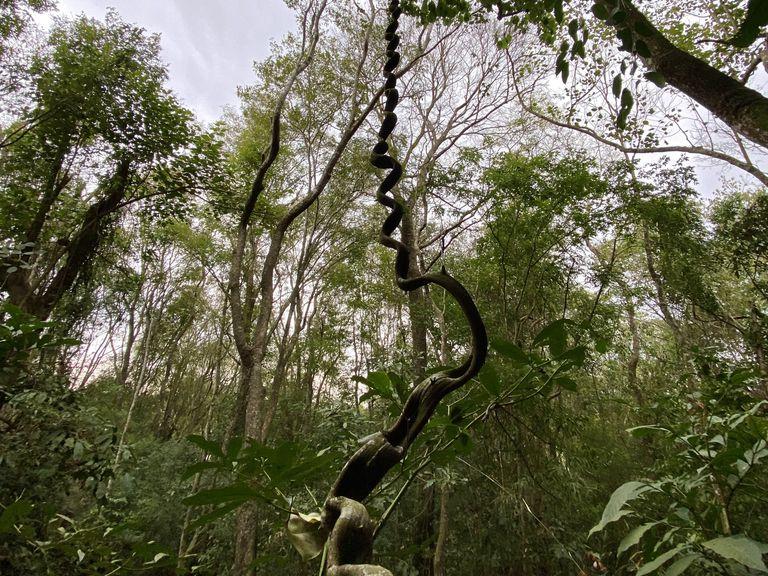 El camino que separa la Posada Puerto Bemberg de la mansión se dibuja en el medio de la selva misionera