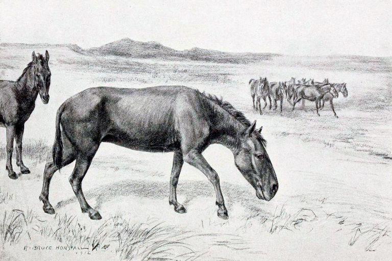 Tal como postulaba Ameghino, hallazgos en décadas posteriores demostraron que el hombre sudamericano convivió con megaterios, gliptodontes, hippidiones [el caballo original americano] y también con la llama gigante