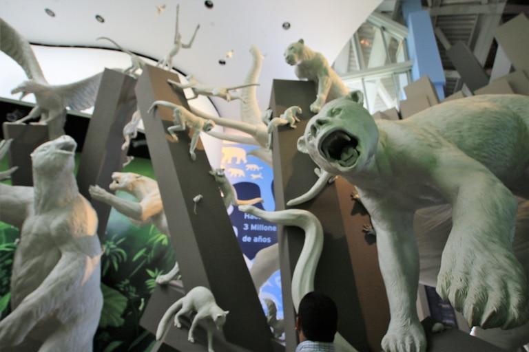 El Museo de la Biodiversidad cuenta como fue el Gran Intercambio Americano