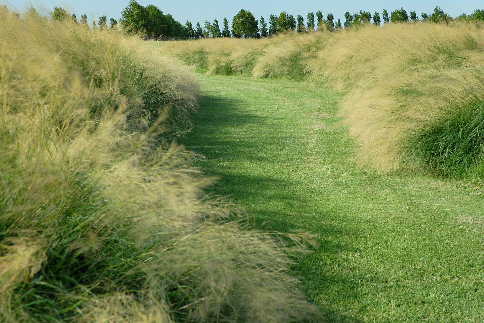 Eragrostis curvula (pasto llorón). Esta especie es una gramínea perenne de fácil cultivo. Puede llegar a ser muy invasiva si no se la controla. Se utiliza para fijar suelos; resiste las bajas temperaturas.