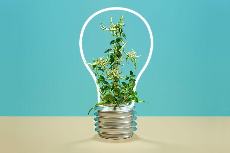 """Arrancar """"pensando en verde"""" puede hacerle toda la diferencia a tu emprendimiento."""