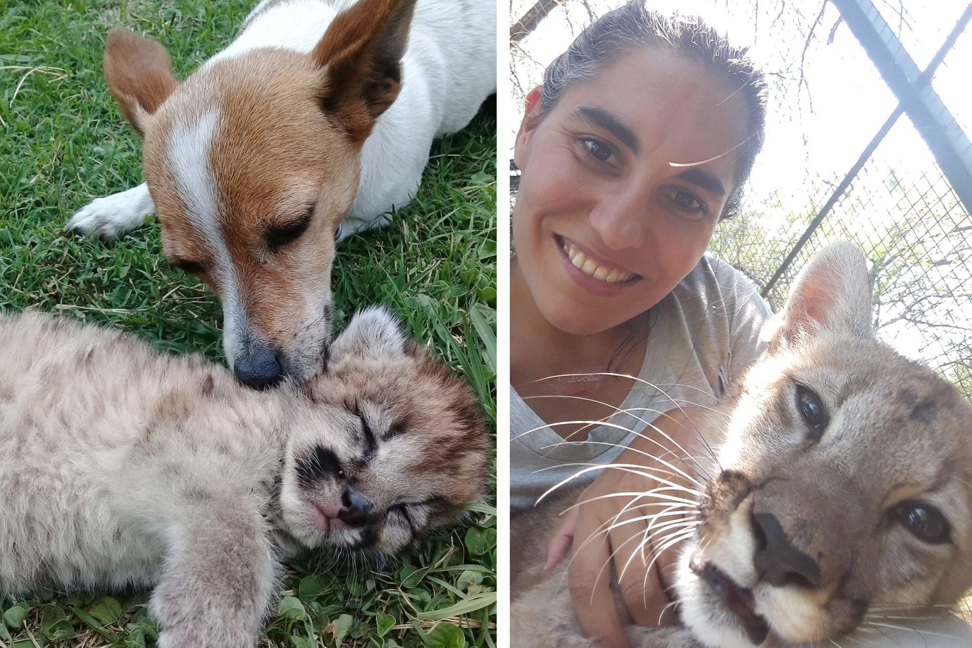 Izquierda: con Pascuas, la perra enfermera que ayuda en el desarrollo y estímulo de los cachorros que llegan a Pumakawa. Derecha: Talita hoy, con Aluminé.