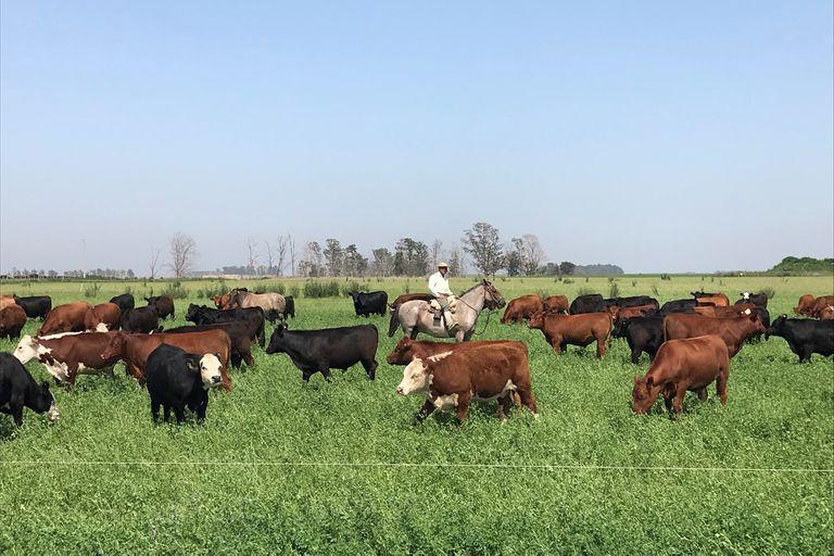Manejo del pasto y altas cargas para una elevada producción de carne