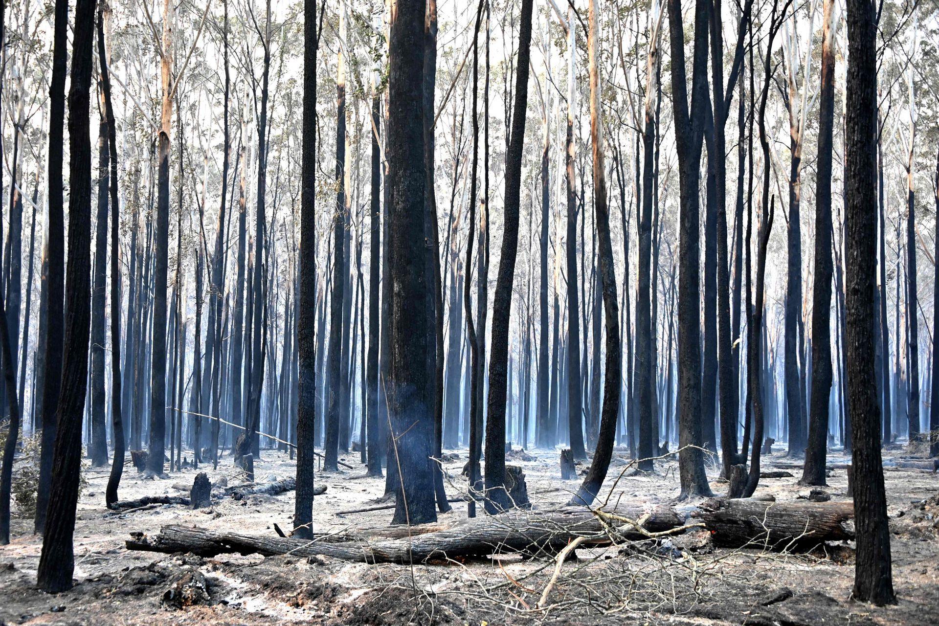 En los últimos días, unos 11.000 km2, el equivalente a Jamaica, han sido quemados, según el servicio de incendios del estado