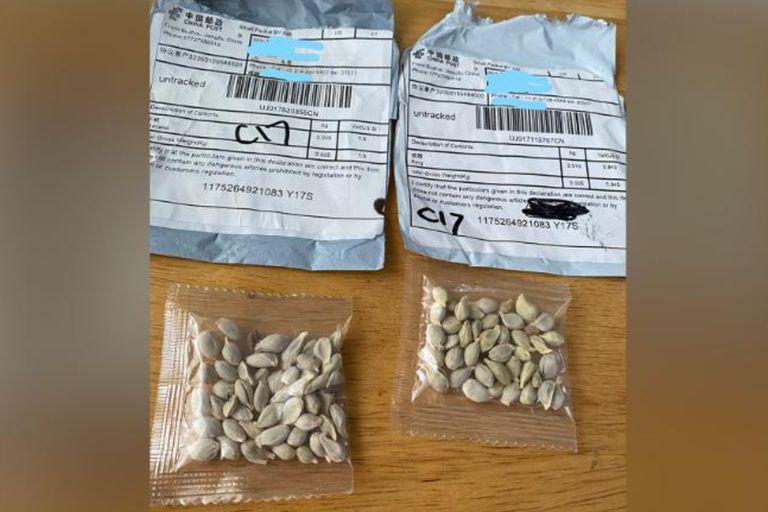 Enigma: alertan por misteriosos paquetes con semillas que provienen de China