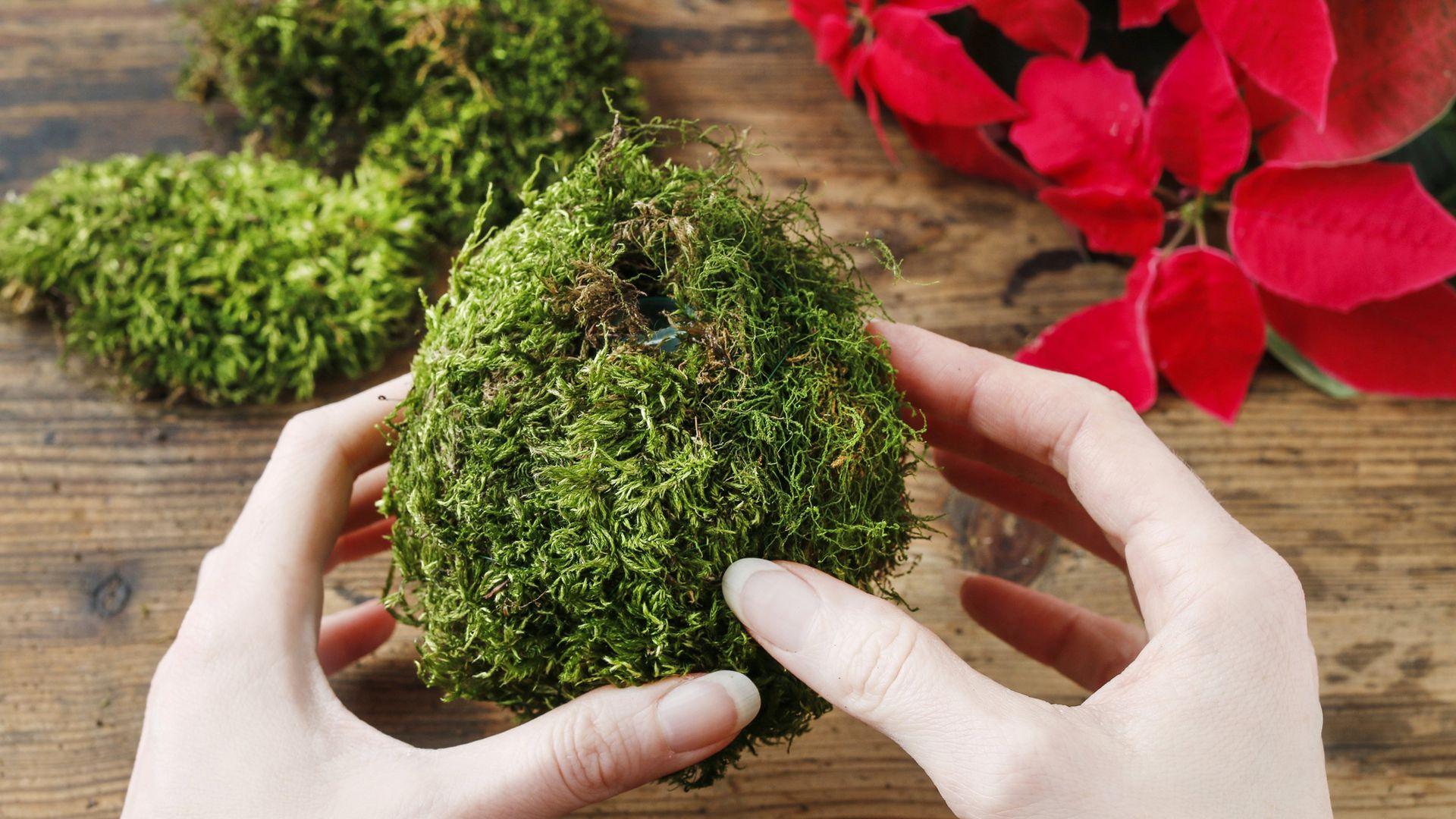 Los kokedamas son esencialmente bolitas de musgo que contienen al sistema de raíces de las plantan y reemplazan a las macetas. Mantienen la humedad y ocupan poco espacio.