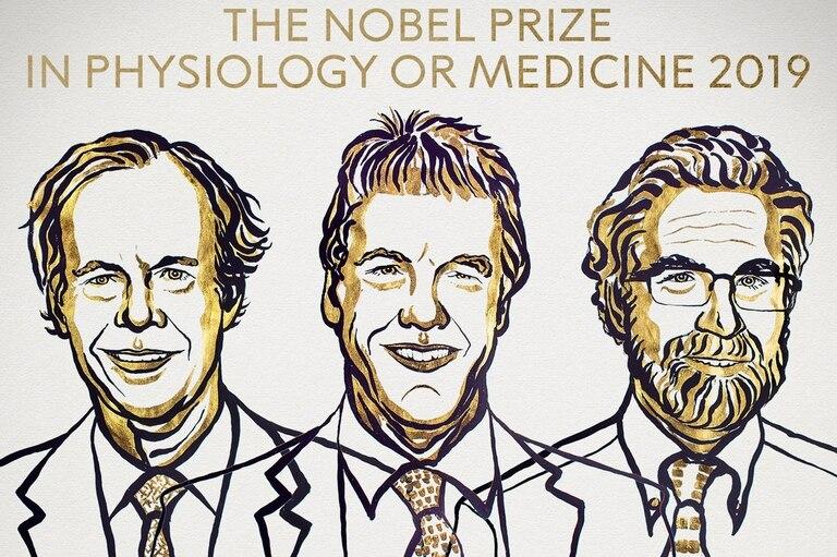 Nobel de Medicina a tres científicos por sus trabajos sobre células y oxígeno