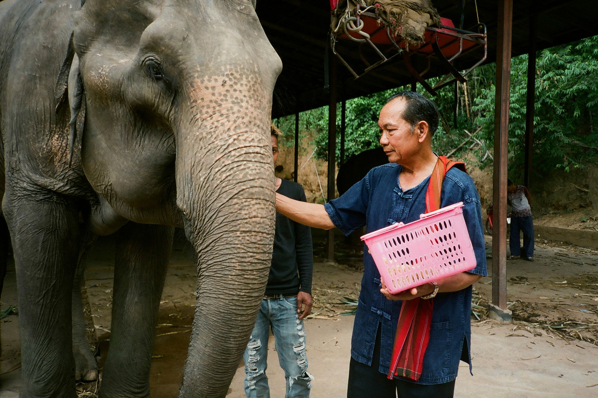 Algunas negociaciones con los dueños de elefantes para que los liberen pueden tardar más de 10 años