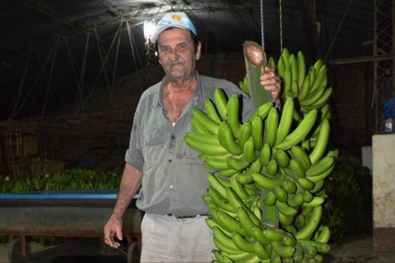 Pedro Bondaruk, uno de los productores que debió dar bananas a las vacas
