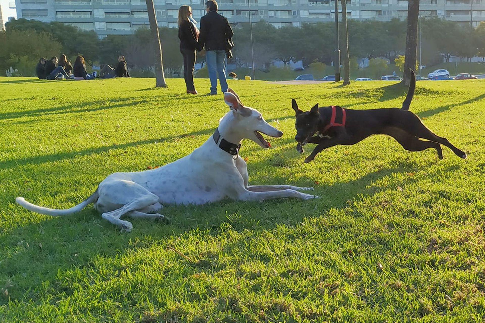 Una postal de domingo: en el parque con amigos.