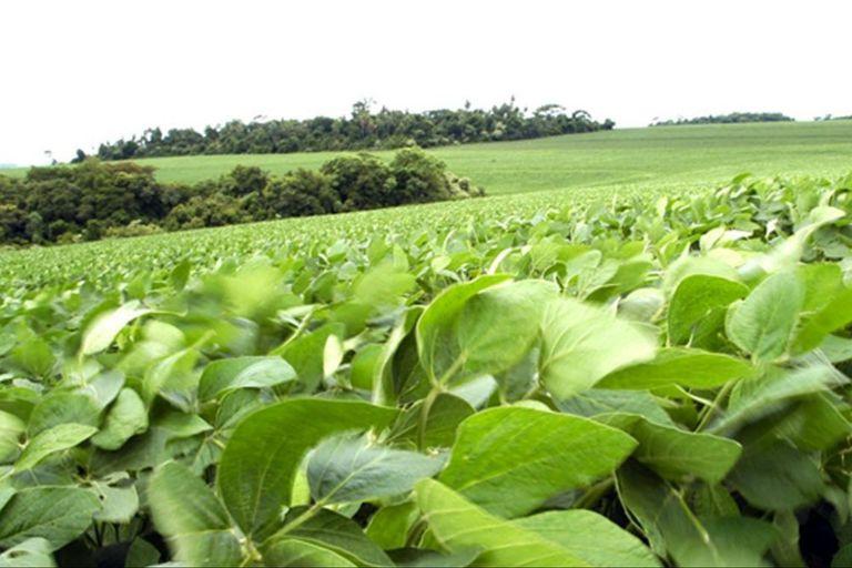 Se deterioró el poder adquisitivo de la soja, según el informe de Néstor Roulet