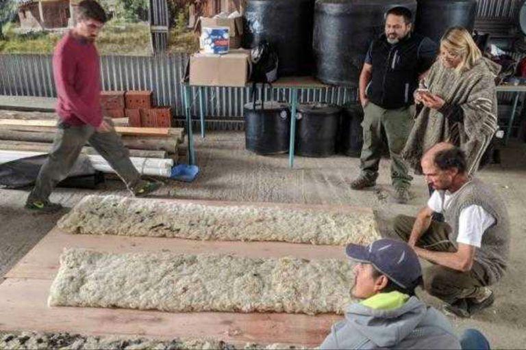 Usan lana de oveja de descarte para reducir el consumo de energía en viviendas
