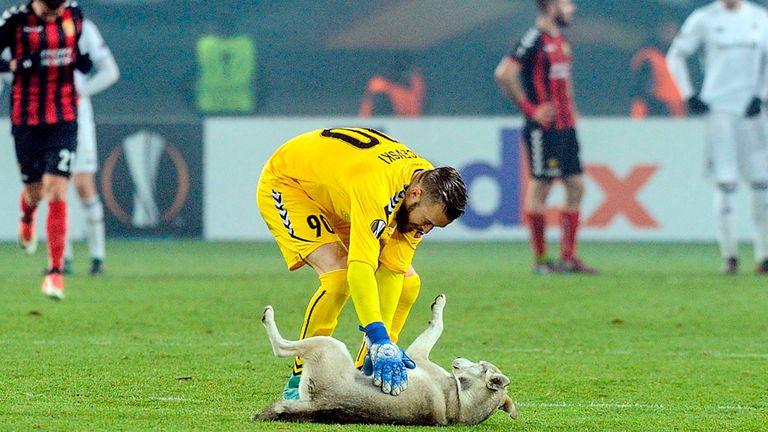 Filip Gacevski controla al perro lobo que invadió la cancha