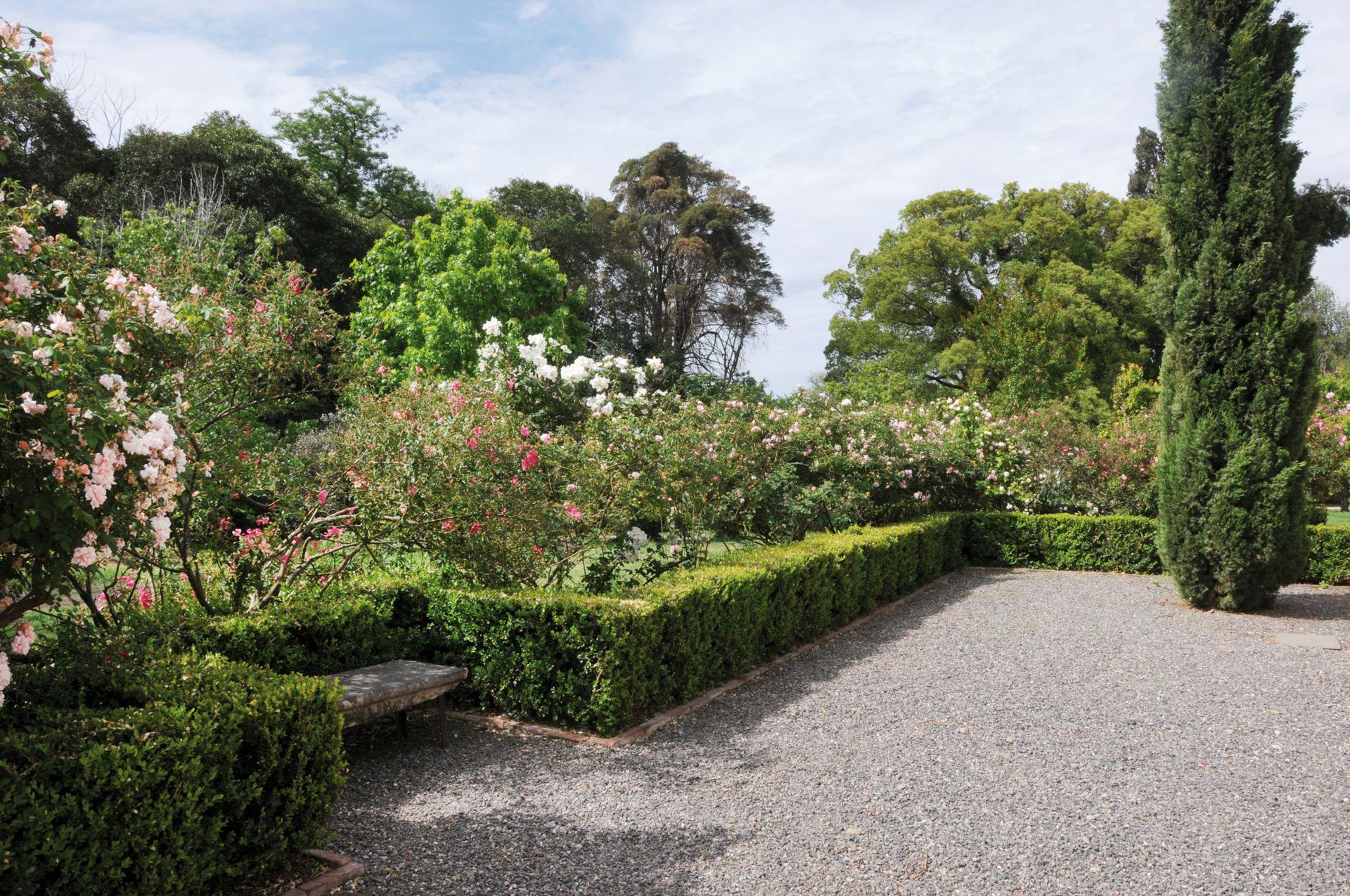 El jardín íntimo de la casa de mujeres se enmarcó con cipreses piramidales ejemplares, solado de granza y bancos de piedra recuperados. Atrás se ve la rosa china 'Mutabilis', la rosa polyantha 'Perle d'Or' y la rosa té 'Général Galliéni'.