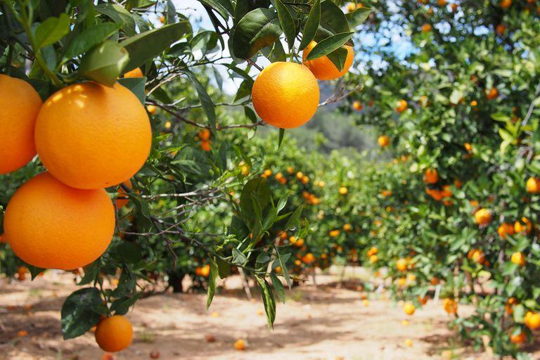 Los productores citrícolas expresaron dificultades ante el contexto