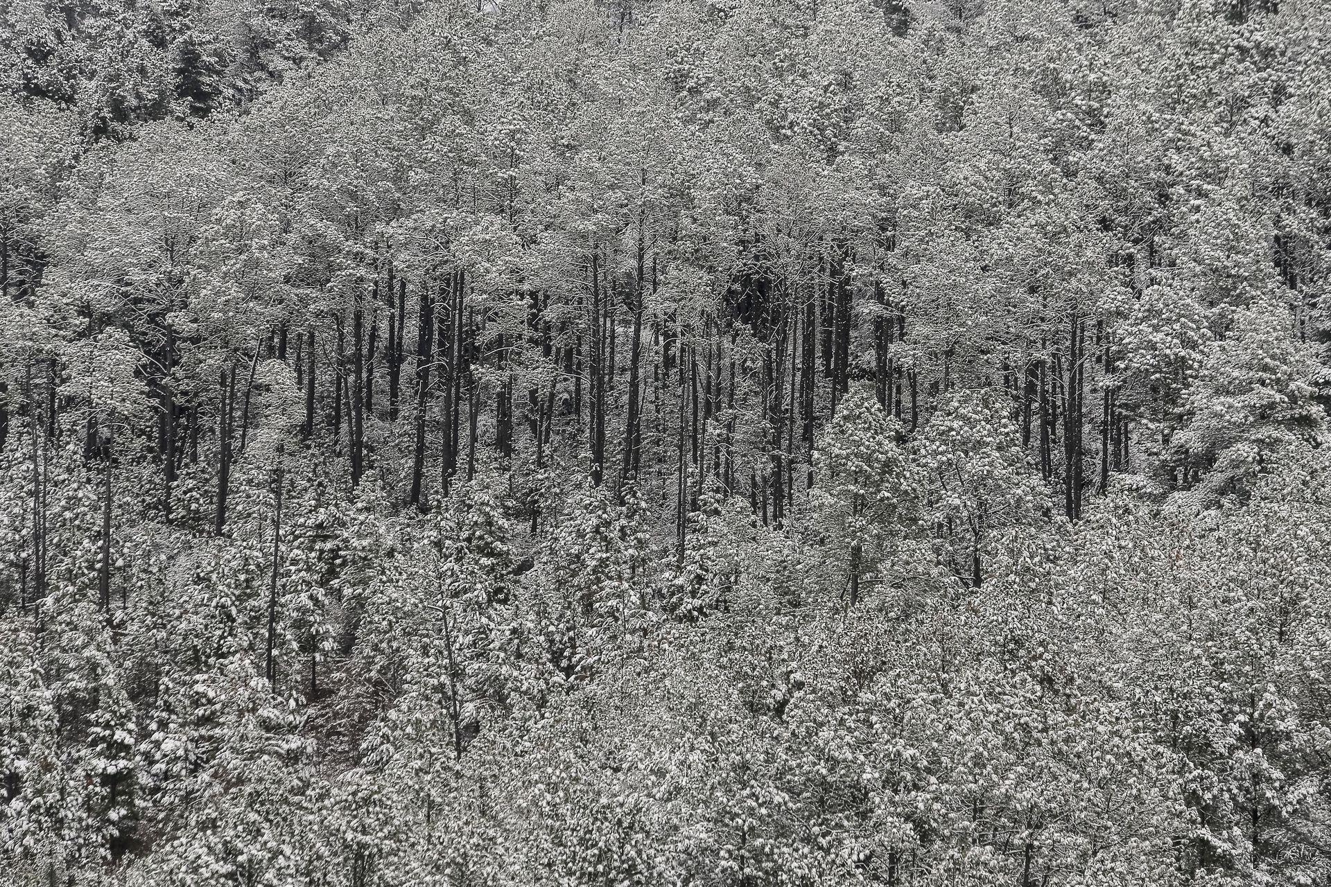 Una postal de los árboles nevados en el Valle de Calamuchita, Villa Berna, Córdoba