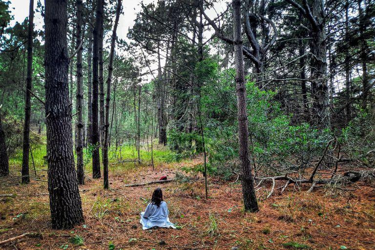 Baño de bosque, el nuevo hit del turismo