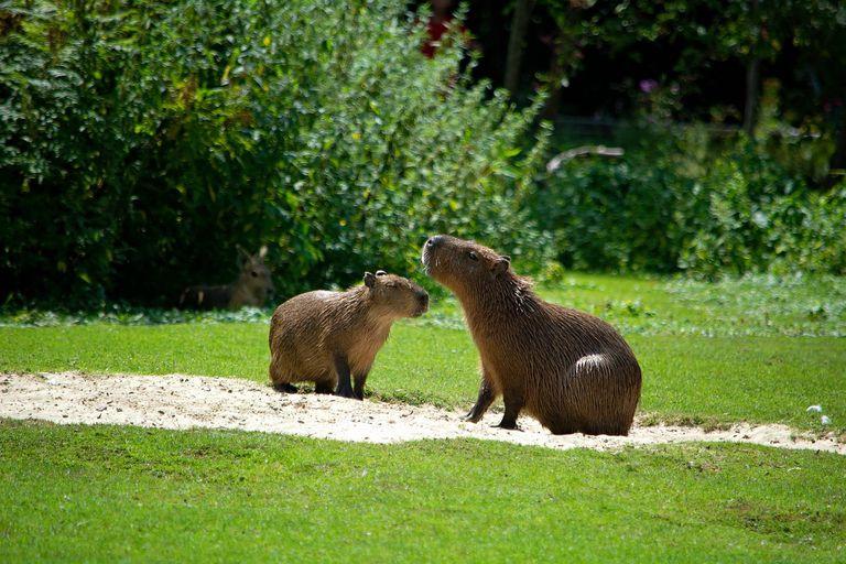 National Geographic destacó que Nordelta fue construido sobre uno de los humedales del río Paraná, hogar de numerosas especies