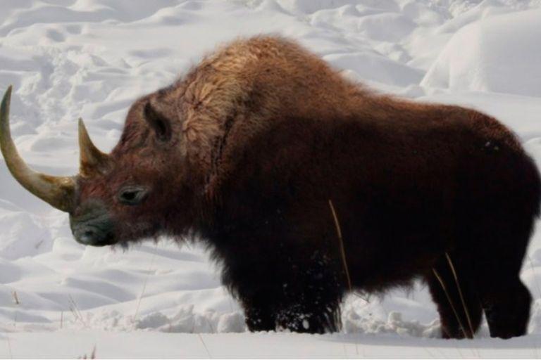 Por qué se multiplican los hallazgos de animales extintos congelados en el hielo