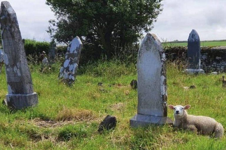 Un rebaño de ovejas descubrió una tumba de casi 150 años de antigüedad