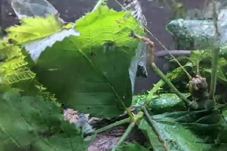 ¿Podés encontrar los nueve insectos camuflados en 20 segundos?