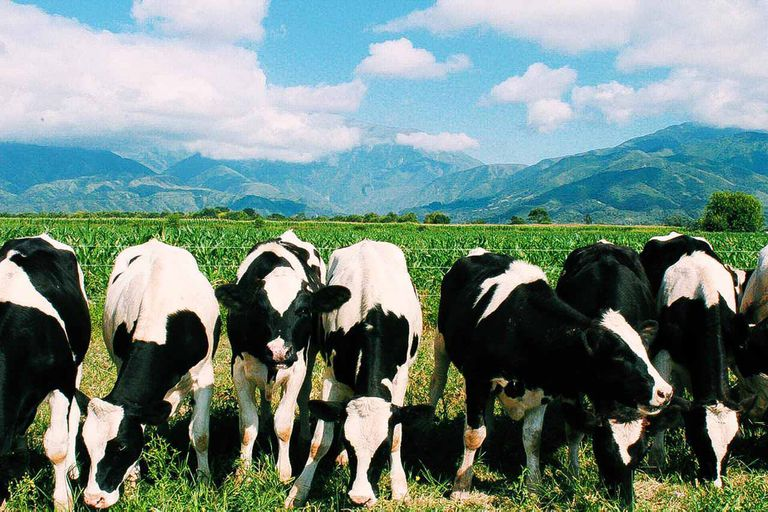 Alimentación pastoril en Campo Quijano