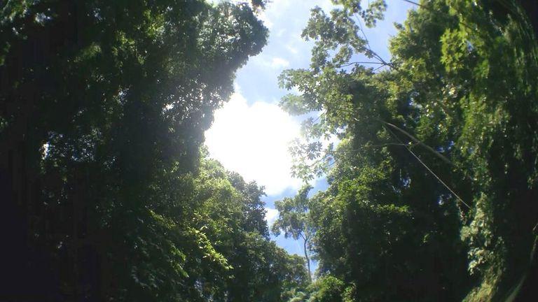 Es difícil ver el cielo durante la travesía. Solo en algunos lugares de esta jungla cerrada se puede apreciar la luz del sol.
