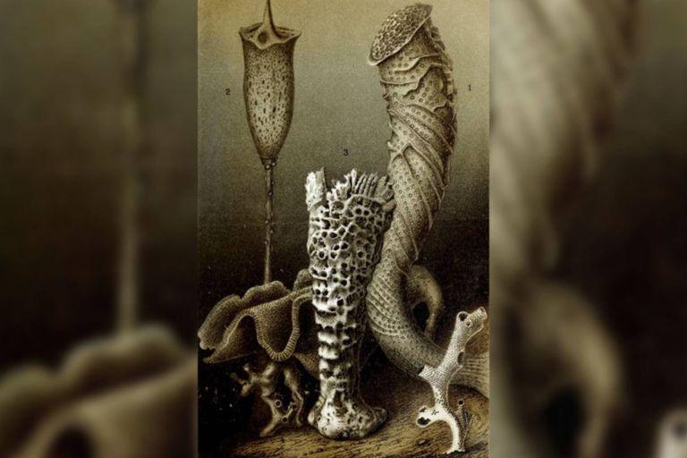 Una esponja de cristal perteneciente a la especie Monorhaphis chuni tenía unos 11.000 años de antigüedad