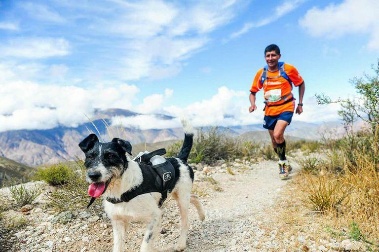 Beethoven, el perro maratonista que corrió 60 kilómetros en la montaña