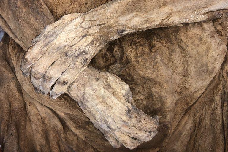 Encuentran a tres descendientes vivos de una antigua momia, uno de ellos famoso