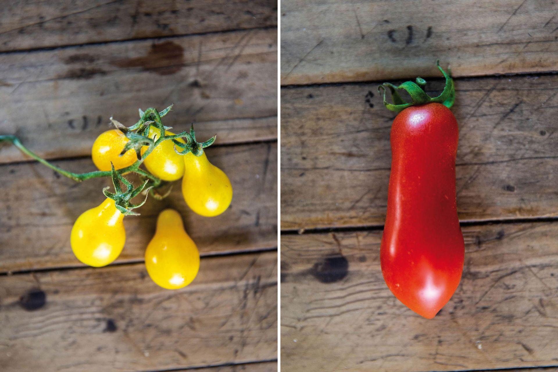 Lágrima de oro, variedad de cherry muy dulce y muy productiva (izquierda). San Marzano, ideal para salsas (derecha).