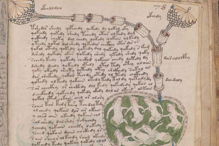 Una de las seis secciones en las que se divide el manuscrito Voynich está ilustrada con mujeres desnudas que nadan en vasijas o en ojos de agua de color verde