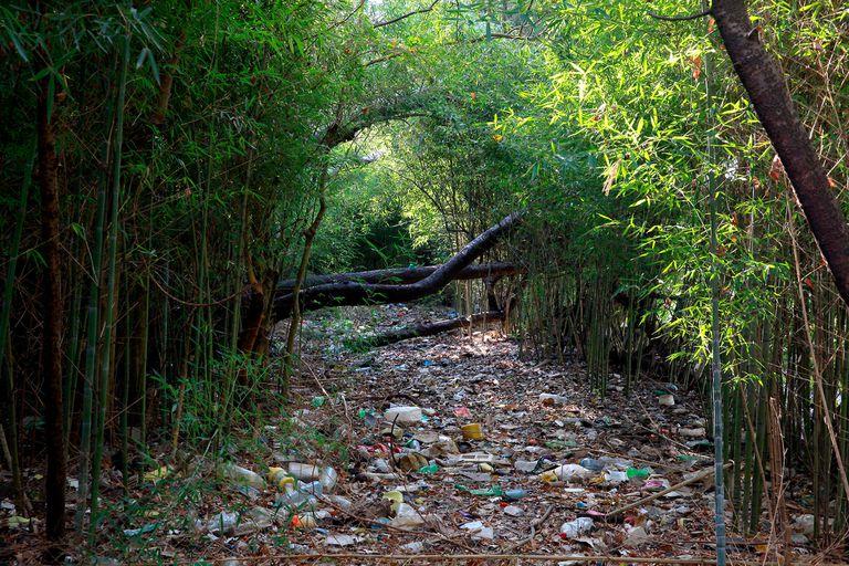 En medio de la frondosa selva, se ve gran cantidad de desechos como neumáticos, autos abandonados y bolsas de nylon, que serán removidos