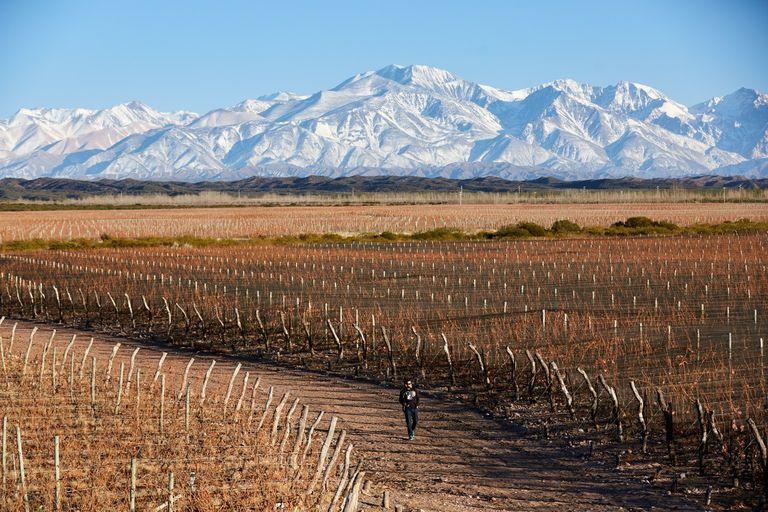 La Cordillera de los Andes de fondo, una de las postales que más seduce a los visitantes, quienes tienen sitios de lujo para alojarse en medio de viñedos.