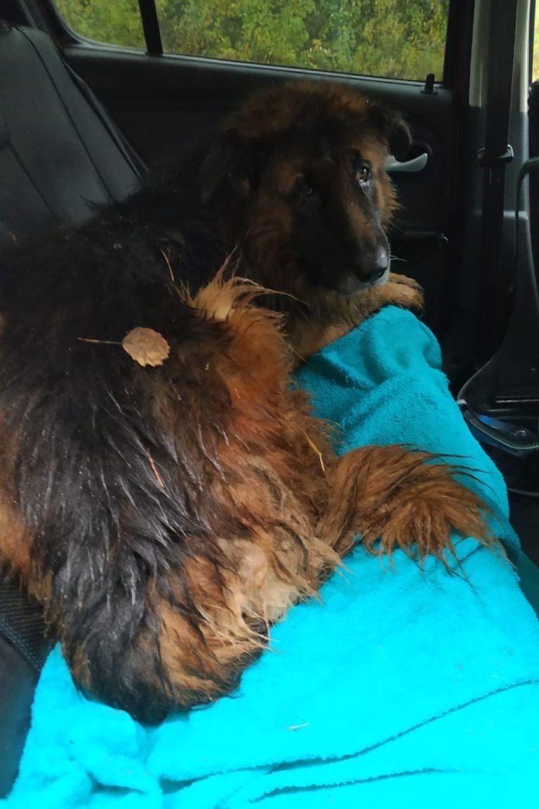 Luego de salir de su tumba el animal fue rescatado por una mujer que circulaba por una ruta cercana