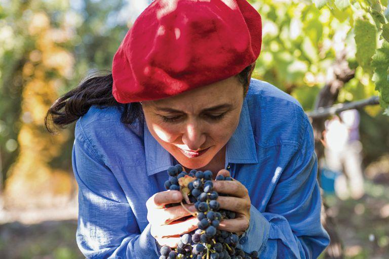 La investigación del ADN del malbec argentino que sorprende al mundo del vino