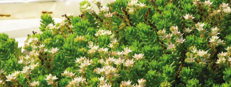 Cactus y suculentas: cinco cosas que tenés que saber para el cultivo en casa