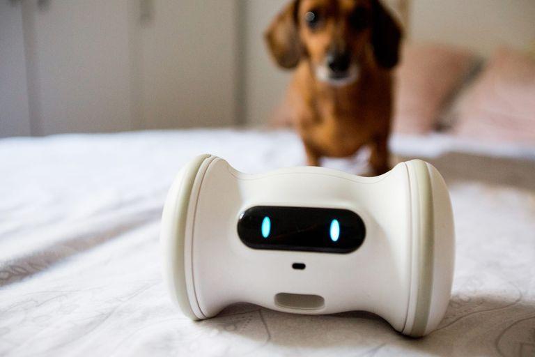 Varram es un dispenser móvil de comida para mascotas, que se va moviendo por la casa para atraer su atención y hacerlos moverse, y los premia con galletitas