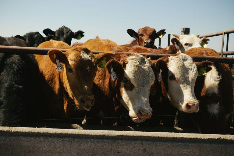 Los argentinos comen cada vez menos carne, ¿ayudará el cepo a revertirlo?