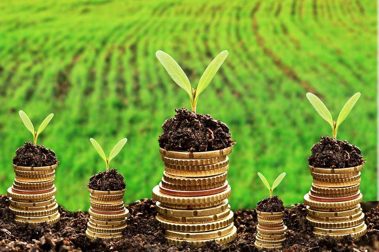 El inesperado aporte del sistema financiero al cuidado del ambiente