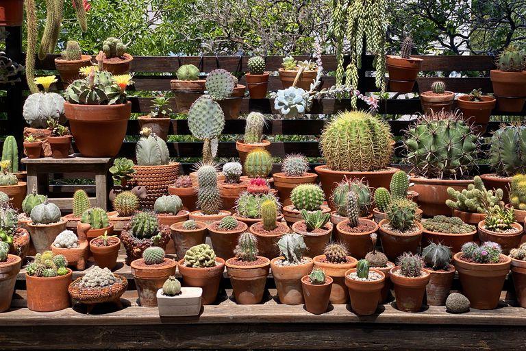 Fan de las suculentas. Atesora en su balcón una colección de 500 plantas