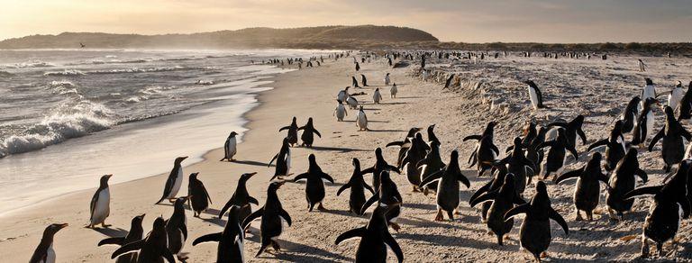 El destino inesperado: Malvinas busca un lugar en el mapa turístico