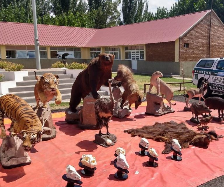 Ejemplares de diversas especies, algunas en peligro de extinción, fueron encontradas en poder del ciudadano oriundo de Buenos Aires