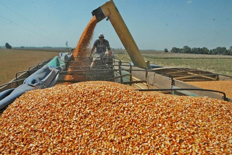El precio del maiz descendió de 157,57 a 140,94 dólares; entre los factores bajistas se destacaron las mejores condiciones climáticas para los cultivos y la controversia por el área sembrada