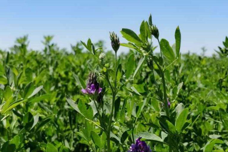 Hay interés por semillas para todos los ambientes donde se pueden implantar pasturas
