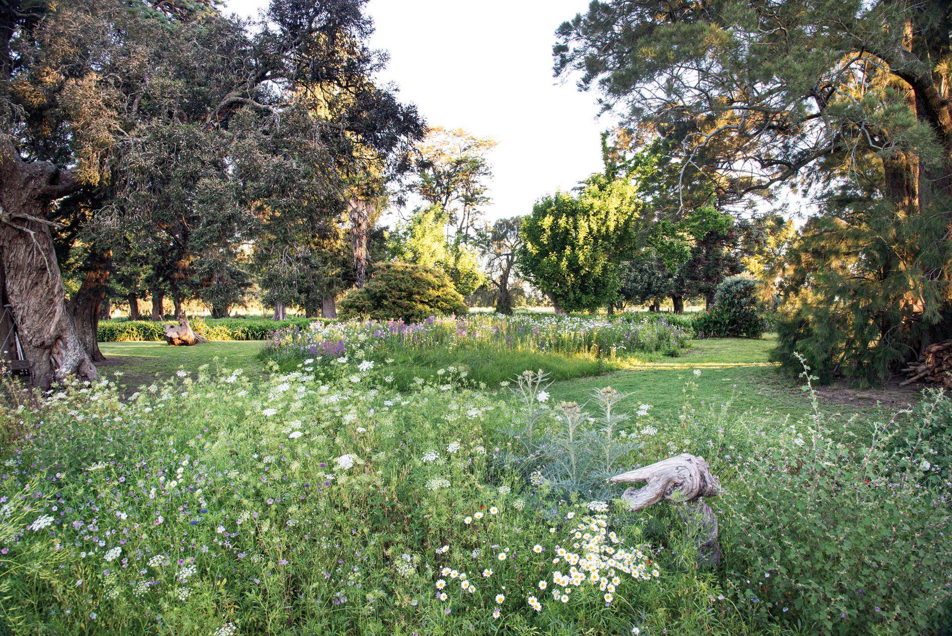 """Entre la añosa arboleda, pero en sectores de sol, se proyectaron """"islas"""" con diferentes mezclas de semillas de especies anuales y perennes."""
