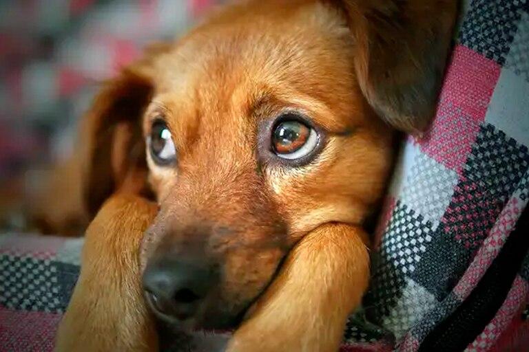 El hombre había adoptad a la mascota de un refugio en el Reino Unido; ¿qué porcentaje de perros son devueltos?